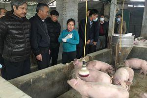 Đề phòng nguy cơ lây lan dịch bệnh đối với gia súc, gia cầm