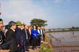 Hà Nội vẫn còn một số diện tích chân ruộng cao chưa đủ nước
