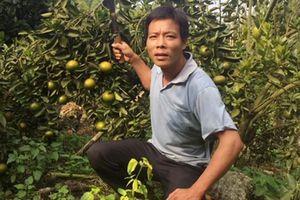 Nông dân-nhà vườn Sơn Động 'bám' vườn ngay đầu Xuân mới