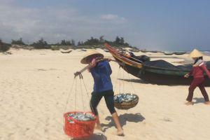 Được 'lộc biển' cá trích, ngư dân Quảng Bình hớn hở