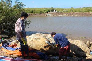 Xẻ thịt xác cá ông nặng khoảng 10 tấn đem chôn lấp