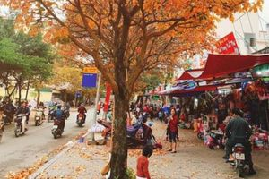 Sau Tết, đây là điều khiến dân mạng phát sốt khi đi trên đường ở Hà Nội, cuối tuần người người đổ xô đi chụp ảnh kẻo hết