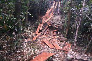 Phát hiện 2 vụ phá rừng quy mô lớn trong dịp Tết