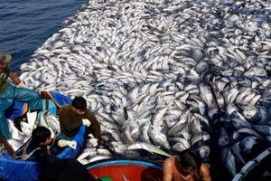Ngư dân Quảng Trị trúng mẻ cá trăm tấn: Vững niềm tin chồi lộc ắt nở hoa… (*)
