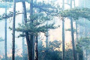 Đám cháy rừng được dập tắt, phương tiện lưu thông trở lại đèo Prenn