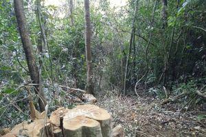 Đắk Nông: Khởi tố đối tượng chặt phá rừng quy mô lớn