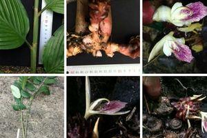Phát hiện thêm loài thực vật mới tại Vườn quốc gia Vũ Quang