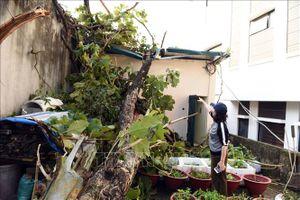 Mưa kèm giông lốc 'tấn công', hơn 300 ngôi nhà ở Tuyên Quang bị hư hại