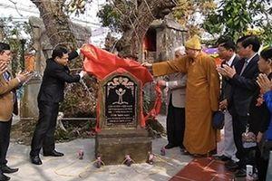Thêm ba cây cổ thụ ở Hải Phòng được vinh danh Cây Di sản Việt Nam