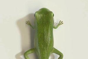 Timelapse 3D quá trình sinh trưởng từ nòng nọc thành ếch