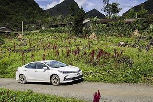 Doanh số bán hàng của Toyota Việt Nam tháng 1/2019 tăng 48% so với cùng kì 2018