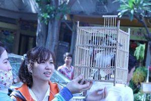 Rằm tháng Giêng, chim được phóng sinh bị cắt trụi lông, mệt mỏi không thèm bay