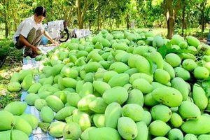 Xoài Việt Nam chính thức được cấp phép vào thị trường Mỹ