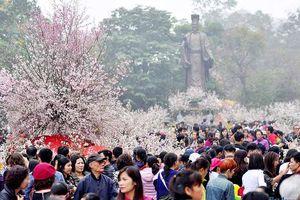 20.000 cành hoa anh đào Nhật Bản sẽ cùng khoe sắc tại Hà Nội