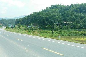 Nâng cao giá trị rừng trồng ở Thái Nguyên