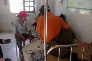 Nghệ An: Đi tảo mộ, 7 người bị ong rừng tấn công nhập viện cấp cứu