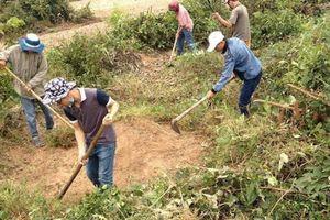 Viếng mộ ngày Rằm tháng Giêng, 7 người trong họ bị ong rừng tấn công