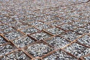 Quảng Trị phát triển nghề làm cá cơm khô