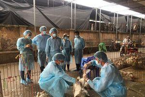 Chủ động phòng dịch cho đàn vật nuôi
