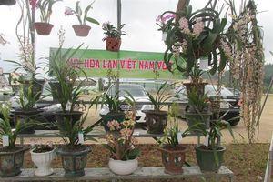 Hoa lan khoe sắc trên đất cảng