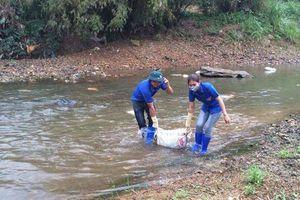 Cảnh báo người dân không vứt xác lợn nhiễm dịch bệnh xuống sông, suối