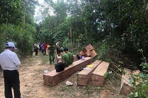 Đắk Lắk: Truy tìm các đối tượng liên quan đến bãi tập kết gỗ 'khủng'