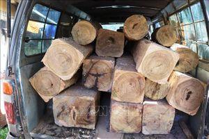 Điều tra vụ vận chuyển 14m3 gỗ lậu tại huyện M'Đrắk