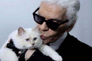 Mèo cưng của Karl Lagerfeld có thể thành 'mèo giàu nhất hành tinh'