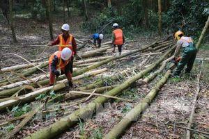 Xây dựng nguồn nguyên liệu gỗ bền vững