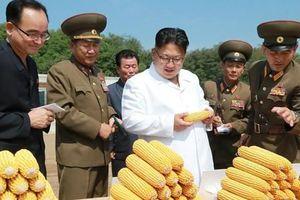Trước thềm thượng đỉnh Trump-Kim, Triều Tiên thừa nhận thiếu lương thực