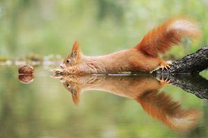 Những bức ảnh cực hài hước và đáng yêu của động vật hoang dã