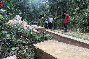 Bãi tập kết gỗ lậu số lượng lớn giữa tỉnh Đắk Lắk và Khánh Hòa