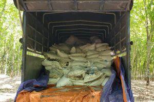 100 tấn bùn thải đổ trộm trong rừng cao su