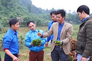 Tỉnh đoàn Nghệ An xây dựng vườn ươm giống cây chuỗi ngọc 2.000m2