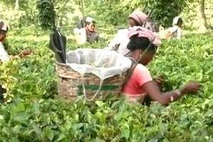 Uống rượu không rõ nguồn gốc, ít nhất 17 nông dân Ấn Độ tử vong