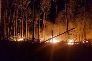 Thừa Thiên Huế: 'Bà hỏa' thiêu rụi 5 ha rừng tràm trong đêm