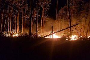 Cháy lớn thiêu rụi 5 ha rừng tràm ở Thừa Thiên - Huế