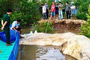 Ngư dân Cà Mau phát hiện xác cá voi dài 17 m