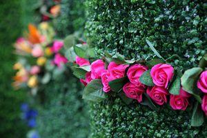 Lễ hội hoa hồng Bulgaria 2019 tại Hà Nội