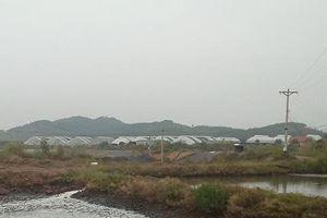 BIM Group nuôi tôm, xả thải thẳng ra môi trường