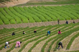 Cuộc sống ở Triều Tiên qua 6 lần đến của một nhiếp ảnh gia Pháp