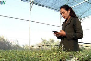 Làng Ba Na đầu tiên ở Gia Lai làm nông nghiệp công nghệ cao