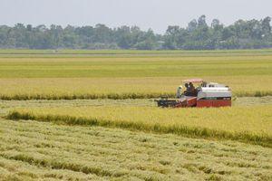 Nỗ lực mở rộng thị trường xuất khẩu lúa gạo