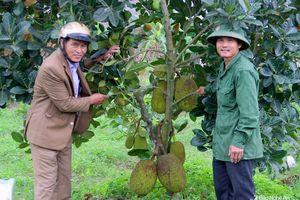 Vườn cây ăn quả ở Nam Đàn 'níu du khách'