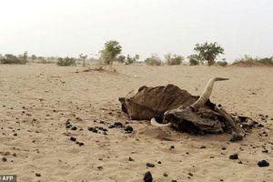 Các nước vùng Sahel đối phó với biến đổi khí hậu