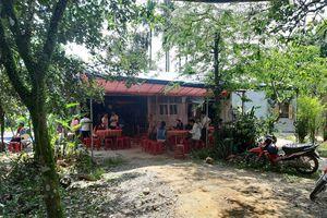 Quảng Nam: Ong rừng đốt một người thiệt mạng