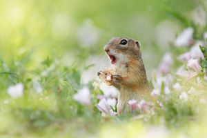 Chết mê cảnh động vật thích thú tận hưởng mùa xuân