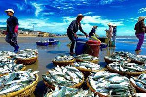 Xuất khẩu hải sản năm 2018 sụt giảm do thẻ vàng IUU