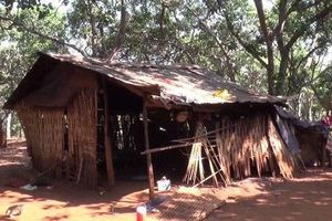 Bình Phước: Bé gái 4 tuổi tử vong bất thường sau khi ăn bưởi nhà hàng xóm