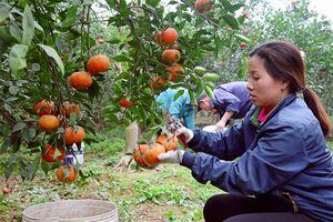 Hiệu quả từ trồng cây ăn quả đặc sản